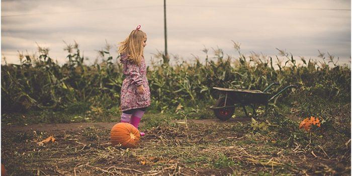 Poplar Farm - Pick Your Own Pumpkins
