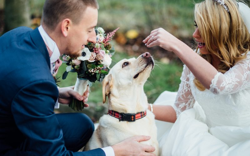 How do I include my pet in my wedding day?